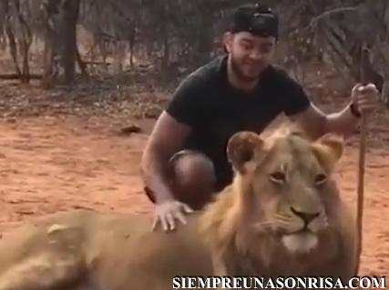 Cuando el león es tú mejor amigo