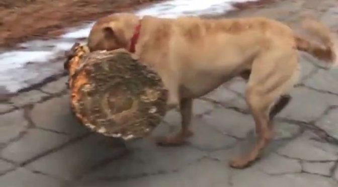 Se busca a quien pueda hacerse cargo de un perro Vasco