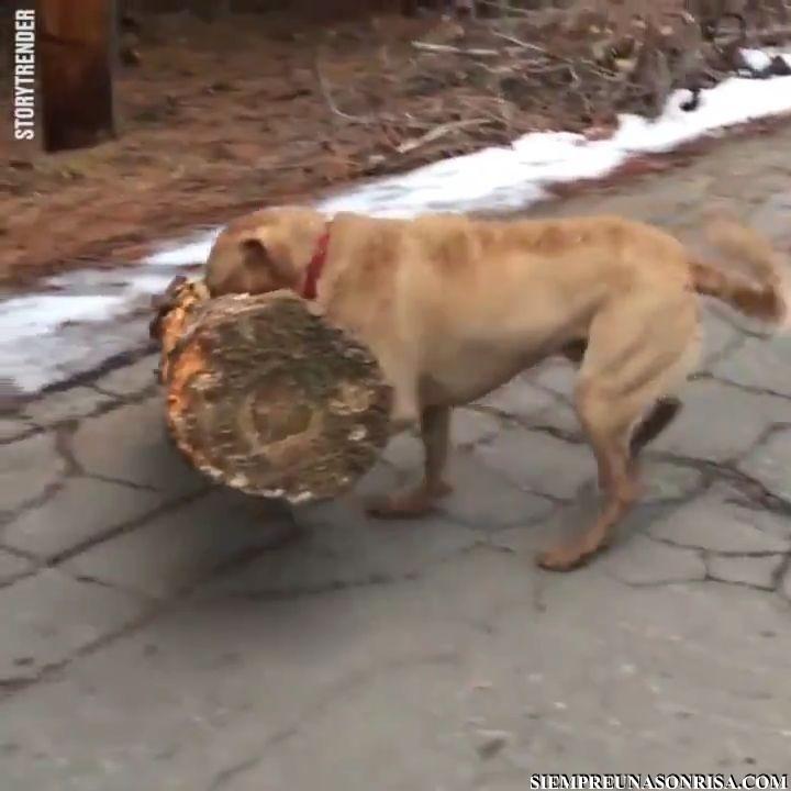VID 20180131 WA0009 thumb9 - Se busca a quien pueda hacerse cargo de un perro Vasco
