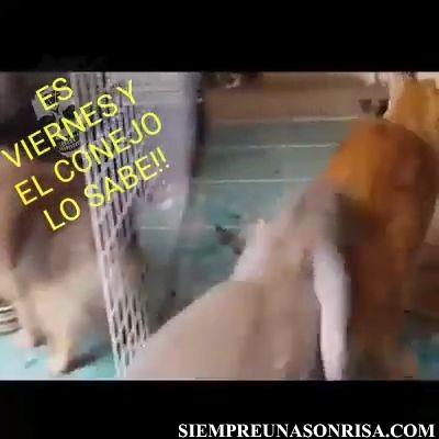 VID 20180201 WA0019 thumb6 - Los animales también saben que ya es Viernes