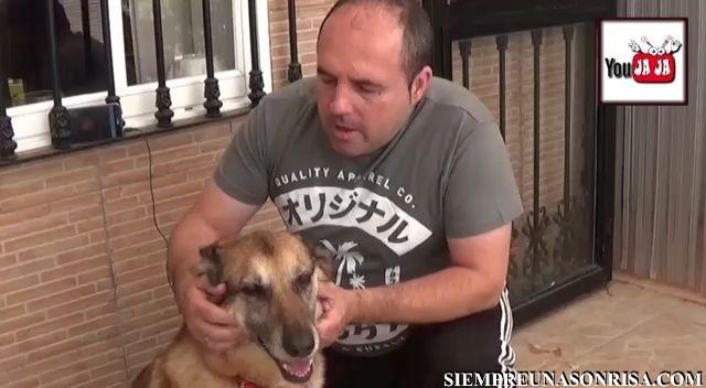Perros que se ganan el respeto de sus dueños