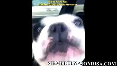 WhatsApp Video 2018 07 17 at 13.28.46 thumb0 - Videos de perros que hablan y cantan