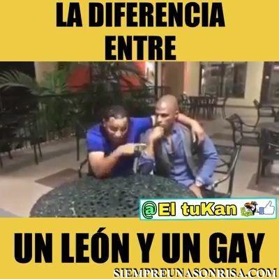 WhatsApp Video 2018 12 04 at 00.14.26 thumb6 - Diferencias: Un León y un Gay