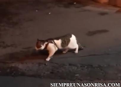 videos,gatos,perros,divertidos,impresionantes,mascotas