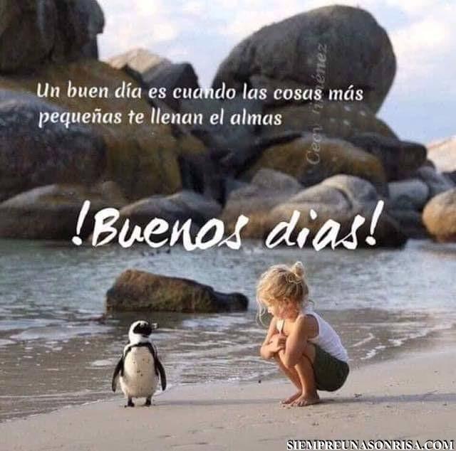 cosas pequeñas,pinguino,fotos,buenos dias,playa,niños