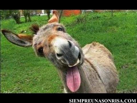 El burro llamado culo, tiene su buena moraleja