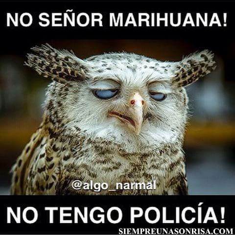 Humor Marihuanero, fotos, animales,graciosos,marihuana
