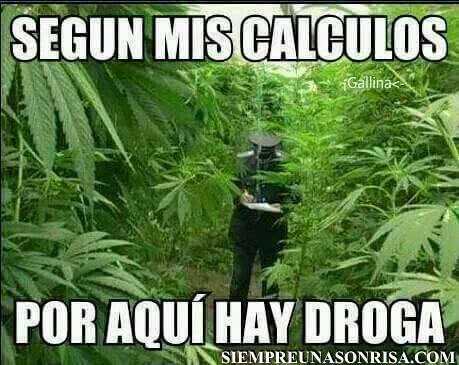 Imagenes, fotos,drogas,marihuana,humor,amarillo
