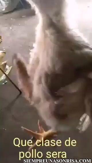 ¿Que cómo se llama este pollo? po… john