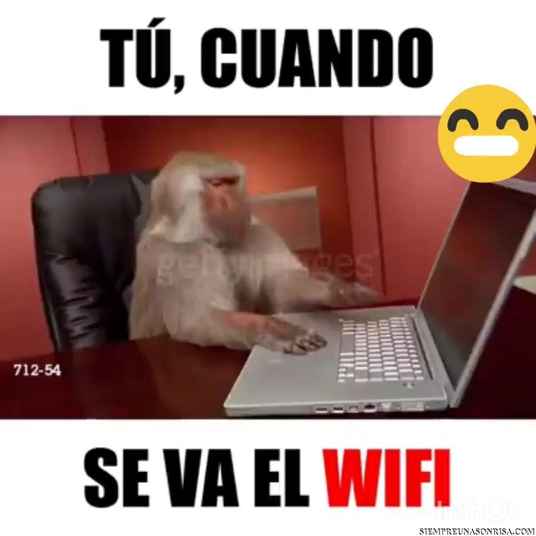 wifi roto,wifi,casa,monos,humor,videos