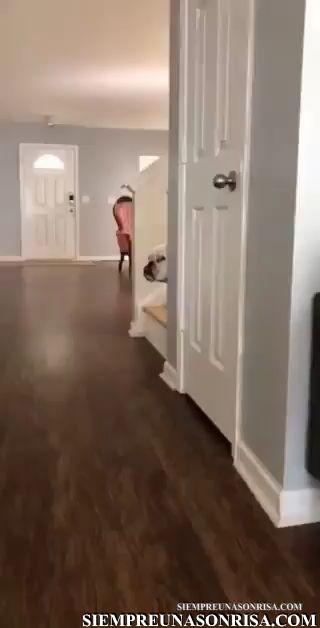 perros chistosos,videos de perrosgraciosos,miradas