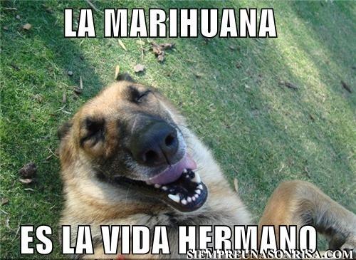perros,marihuana,humor,fotos,imagenes,humor marihuanero