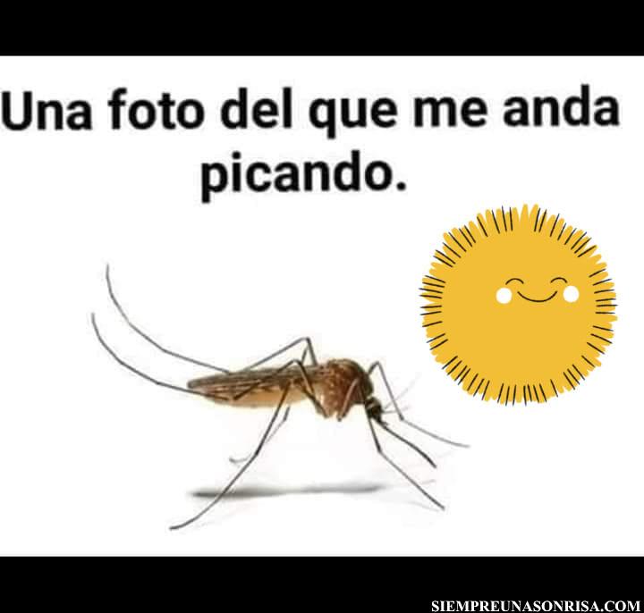 una foto de un mosquito