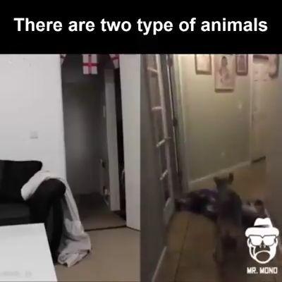 videos divertidos perros y gatos miniatura