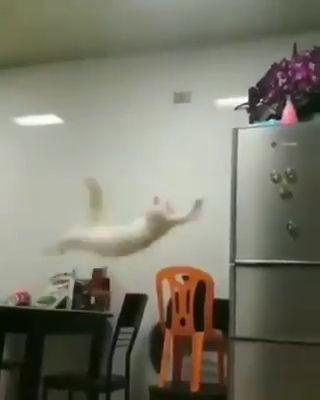 Este gato es como Yo cuando tomo decisiones…