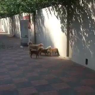 Dogwarts miniatura