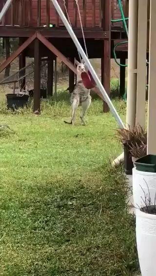 Este canguro se divierte como un niño miniatura