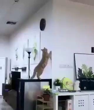 La curiosidad castro al gato miniatura