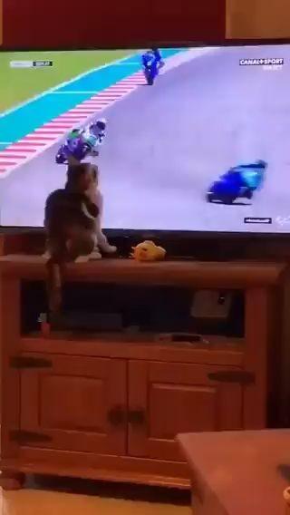 Este gato tiene poderes