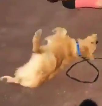 Perros comportándose como humanos