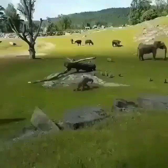 Los elefantes son lo mejor de este mundo....