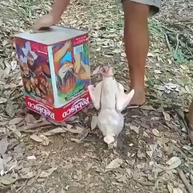 Pollo a la broster
