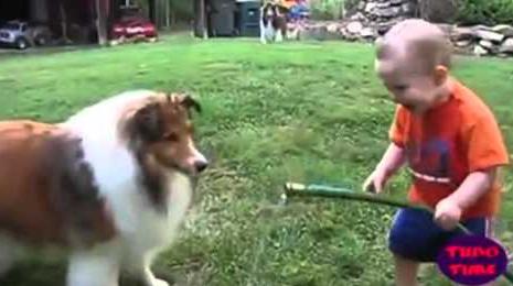 perros, videos jugando con niños