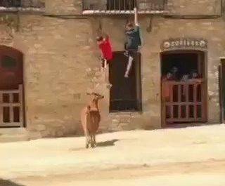 Ésta vaca práctica Parkour