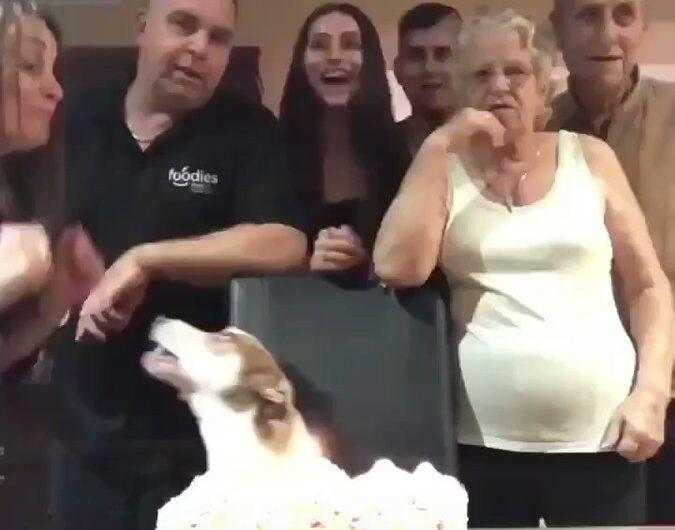 Seguro que este perrito es el más feliz en el mundo !!!
