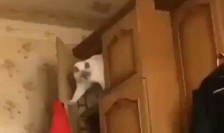 Los gatitos también se extinguen solos!!