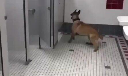Este perro está entrenado para no dejarte tranqui