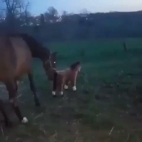 Tú no eres mi hijo !!