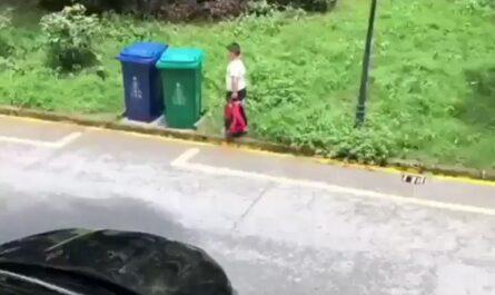 videos niños
