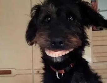 perro dentadura dueña, videos virales, perro con dentadura postiza