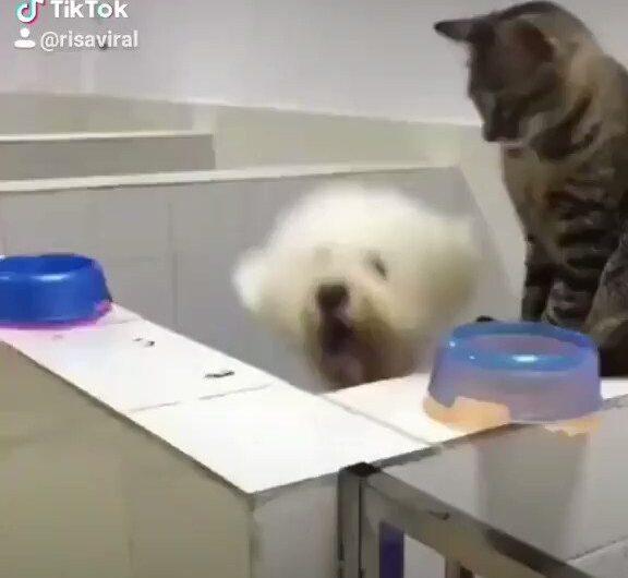 Los gatos son la maldad del universo !!!