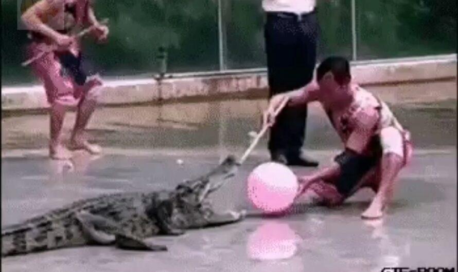Sin hacer ruido por favor, son muy nerviosos los cocodrilos