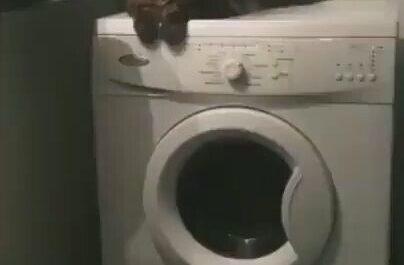 Calorcito y vibrador, qué más puede pedir un gato ?