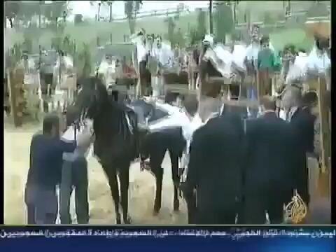 Súbete a ese caballo, es muy mansito, dijeron