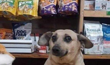 fotos graciosas perros, daltonicos, collares, chistes de perros