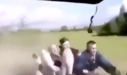 videos fails humor a lo bestia miniatura
