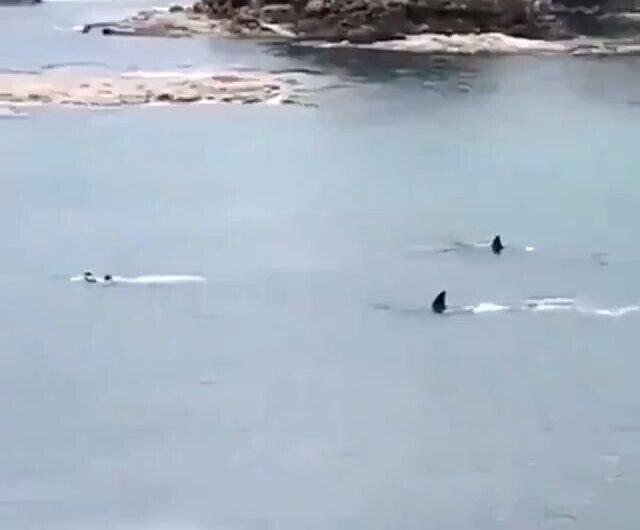 No tenían hambre los tiburones ?