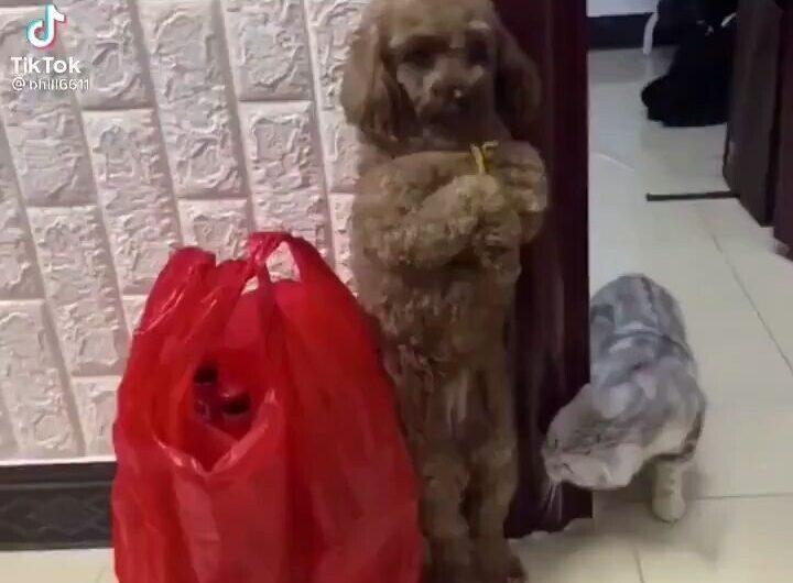 Perros y Gatos – Videos TikTok
