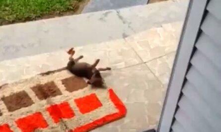 videos animales amigos mascotas miniatura