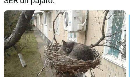 fotos humor gatos pajaros