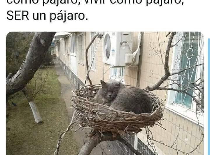 Para cazar pájaros tienes que vivir como un pájaro