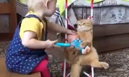 videos gatos y niños