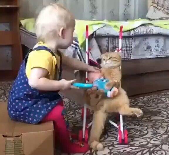 No me gustan los gatos porque son más arisco