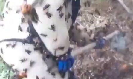 videos de trabajos de mierda humor risas pandemia de locos